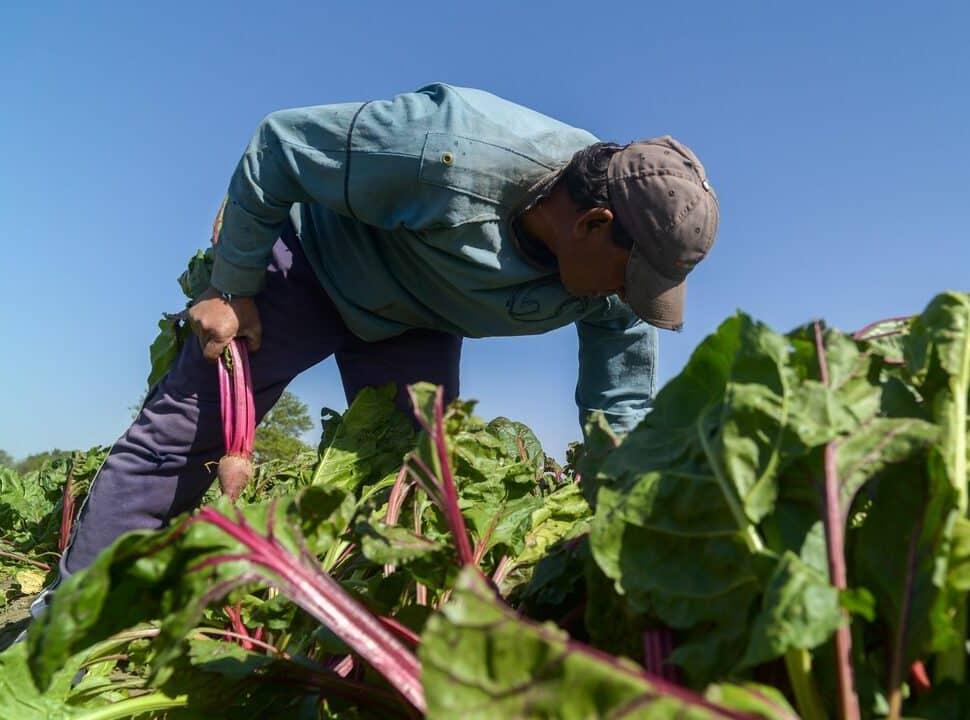 Crecen en la zona oeste las experiencias de agricultura familiar y las huertas agroecológicas