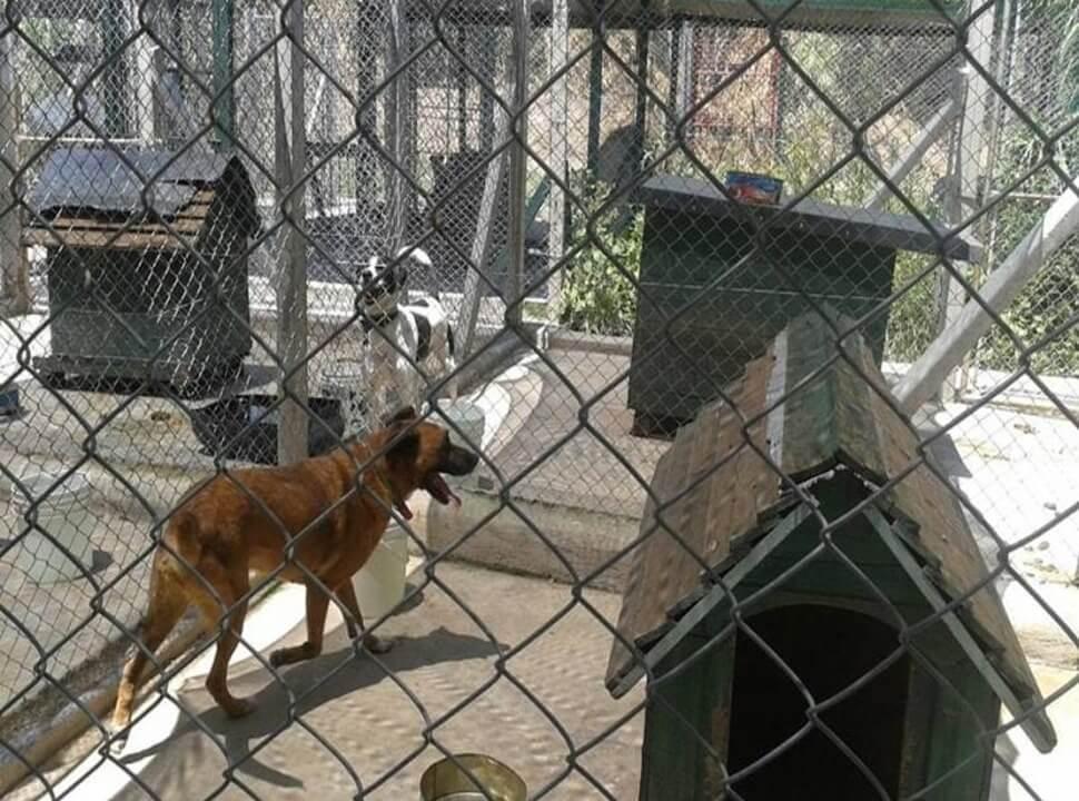 Palomar: el municipio anunció que se hará cargo de la mudanza del refugio de animales, pero la institución vuelve a oponerse